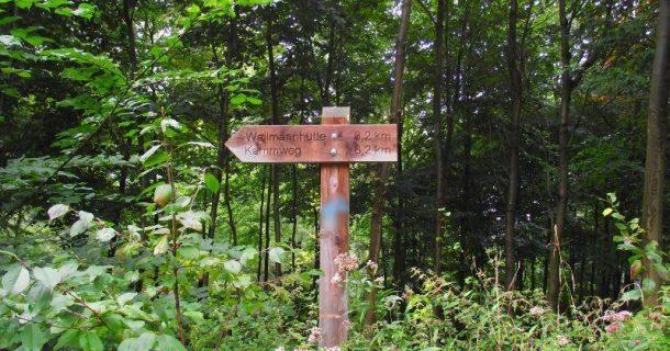 Wald: Nicht nur für Wanderer..